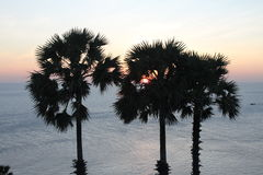 Coconut palm tree silhouette. Sunset Stock Photo