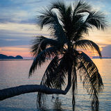 Coconut palm tree silhouette at sunset. Thailand Stock Images