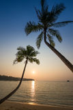 Coconut palm tree silhouette at sunset. Thailand Stock Photography