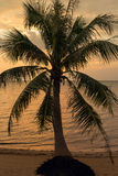 Coconut palm tree silhouette at sunset in Thailand Stock Photography