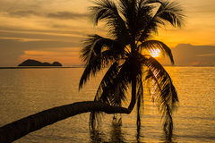 Coconut palm tree silhouette at sunset in Thailand Royalty Free Stock Photo