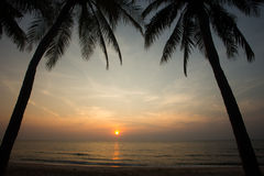 Coconut palm tree silhouettes at sunset (sunrise) Stock Image