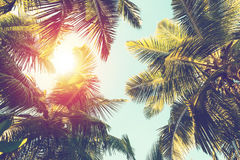 Coconut palm tree on sky background. Low Angle View. Toned image Stock Images