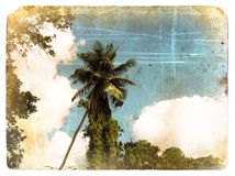 Coconut palm tree, sky, clouds. Old postcard. Royalty Free Stock Photo