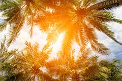 Coconut palm tree and sky on tropical beach at summer time. Warm tones stock image