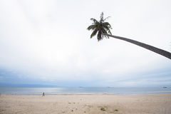 Coconut palm tree sloping on the beach in a cloudy and rainy day Stock Photography