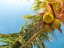 Coconut Palm Tree Summer stock photography