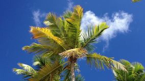 Coconut palm tree stock footage