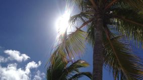 Coconut palm tree stock video footage