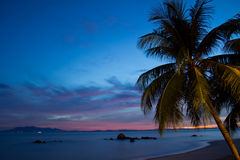 Coconut palm tree at sunrise. Against blue sky, picture taken using long exposure Royalty Free Stock Photos