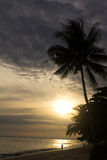 Coconut palm tree at sunrise. Sihouette of coconut palm tree at sunrise Royalty Free Stock Photos