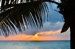 Coconut palm tree at sunset Stock Photos