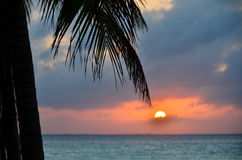 Coconut palm tree at sunset Royalty Free Stock Image