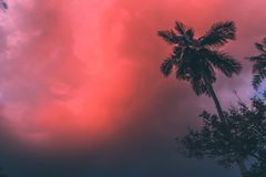 Coconut palm tree at sunset royalty free stock photo
