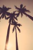 Coconut palm tree sunset silhouette vintage retro Stock Photography