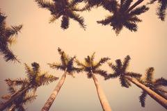 Coconut palm tree sunset silhouette vintage retro Royalty Free Stock Photos