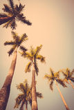 Coconut palm tree sunset silhouette vintage retro Stock Photo