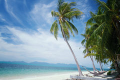 Coconut palm tree on sunshine and sandy beach and tropical sea a. T Samui Island,soft and blurry background Royalty Free Stock Image