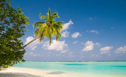 Coconut palm tree on a tropical beach Royalty Free Stock Image