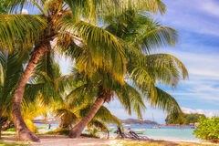 Coconut palm tree on tropical beach and blue ocean Royalty Free Stock Image