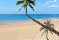 Coconut palm tree on the tropical beach. With blue sea Royalty Free Stock Image