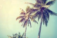 Coconut palm tree on tropical beach blue sky Stock Photos