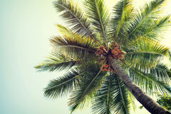 Coconut palm tree on tropical beach blue sky Royalty Free Stock Images