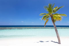 Coconut palm tree on tropical beach Stock Photos