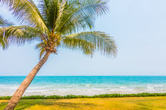 Coconut palm tree on the tropical beach and sea Stock Image