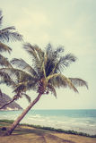 Coconut palm tree on the tropical beach and sea Stock Photo