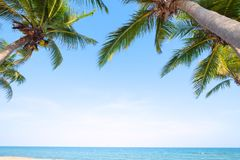 Coconut palm tree on tropical beach seascape in summer. stock photography