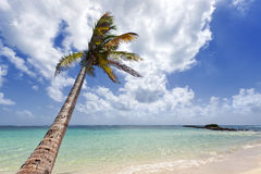 Coconut palm tree on a tropical beach Stock Image