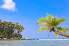 Coconut palm tree with Tropical island for summer season backgro. Und Stock Images