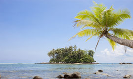 Coconut palm tree with Tropical island for summer season backgro. Und Royalty Free Stock Photography