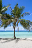 Coconut Palm Tree On Tropical White Sand Beach. With crystal clear water in Panglao, Bohol, Philippines. Holiday and Travel Symbol Concept Stock Images