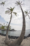 Coconut Palm Tree on tropical white sand beach Stock Photos