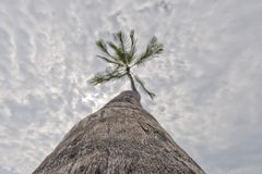 Coconut Palm Tree on tropical white sand beach Royalty Free Stock Photo