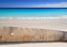 Coconut palm tree trunk lying on turquoise beach Royalty Free Stock Photos