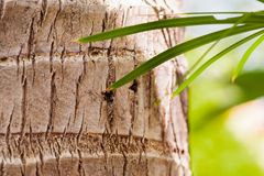 Coconut Palm tree trunk in tropical forest. With some palm tree leaves stock photo