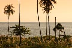 Coconut palm tree at twilight. Stock Photography