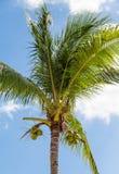 Coconut Palm Tree Under Nice Sky Royalty Free Stock Photos