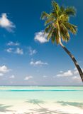 Coconut palm tree on an unspoilt stock image