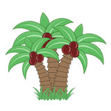 Coconut palm tree. On white background Stock Image