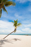 Coconut palm tree with white sand beach and blue sky background Stock Photos