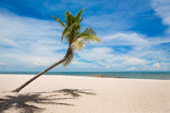 Coconut palm tree with white sand beach and blue sky background Royalty Free Stock Images