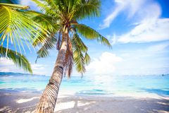 Coconut Palm tree on the white sandy beach Stock Photography