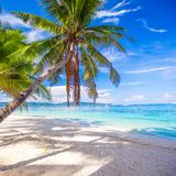 Coconut Palm tree on the white sandy beach Stock Photos