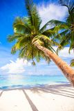 Coconut Palm tree on the white sandy beach Royalty Free Stock Image