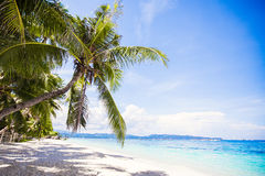 Coconut Palm tree on the white sandy beach Royalty Free Stock Photo