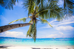 Coconut Palm tree on the white sandy beach Royalty Free Stock Photos